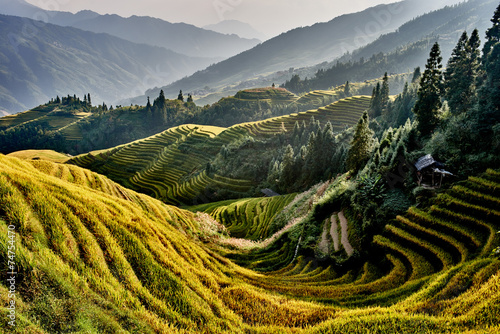 rice terraced fields Wengjia longji Longsheng Hunan China Fototapet