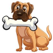 A Dog With A Bone
