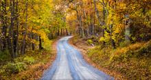 Autumn Color Along A Dirt Road...