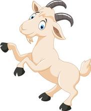 Cartoon Goat Character
