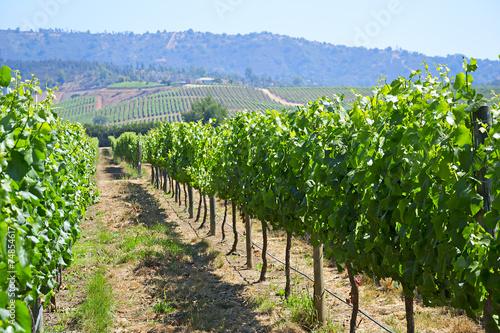 Stickers pour porte Amérique du Sud Casablanca valley vineyard, Chile