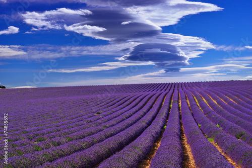 Foto op Aluminium Snoeien Lavender field