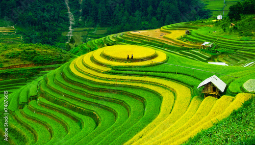 Recess Fitting Rice fields Rice fields on terraces in vietnam