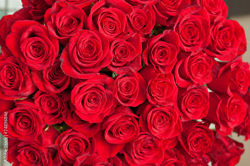red roses #74896846