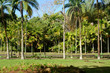 picturesque garden of Pamplemousse in Mauritius Republic