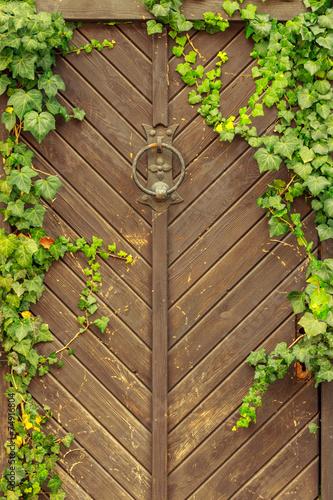 zielona-roslina-na-drewnianym-tle