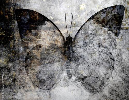 butterfly - 74924655