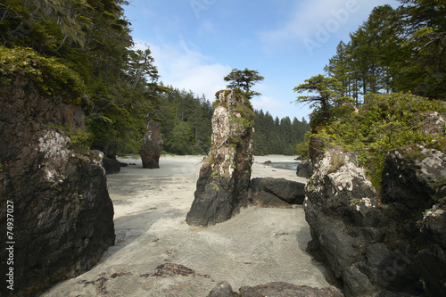 Photo  Landscape in Cape Scott Park. Vancouver. Canada