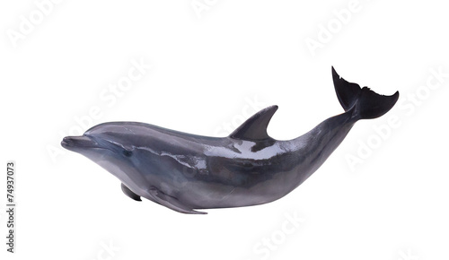 Foto op Aluminium Dolfijn dark gray isolated dolphin