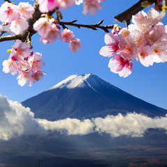 Obraz na PlexiMt Fuji and Cherry Blossom