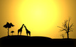 canvas print picture - Afrika Giraffen