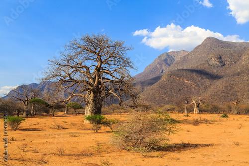 Staande foto Afrika Baobab trees in a valley in Tanzania