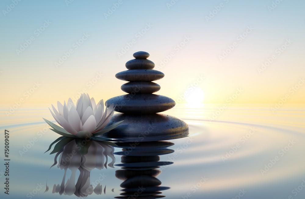 Fototapety, obrazy: Biały kwiat lotosu i kamienie w wodzie