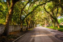 Oak Trees Along Magnolia Avenue In St. Augustine, Florida.
