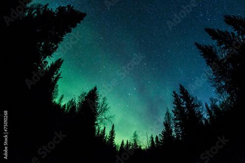 Foto auf Gartenposter Nordlicht Northern lights above a forest