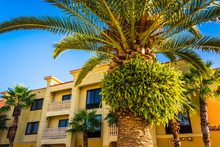Palm Tree And Hotel In Vilano ...