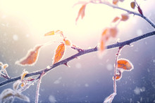 Winter Nature Background. Froz...