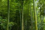 Światło w lesie bambusów