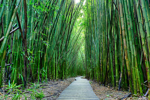 Photo Stands Bamboo Bamboo forrest