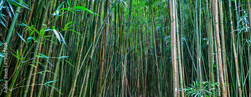 In de dag Bamboo Bamboo Forrest