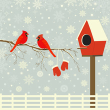 Red Birds On Branch With Snow ...