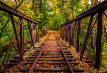 Railroad Tracks Covered In Aut...