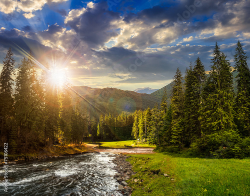 Fototapeta Mountain river in pine forest at sunset