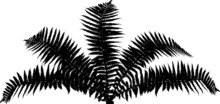 Fern Bush Black Silhouette Iso...