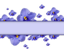Beautiful Saintpaulia Flowers And Card With Space For Your Text