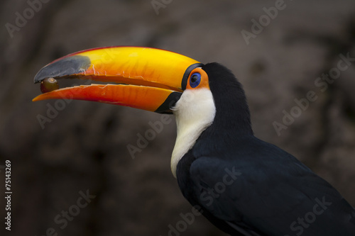 Door stickers Toucan Toekan met druif.