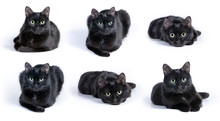 Collection Of Images Of Black Cat