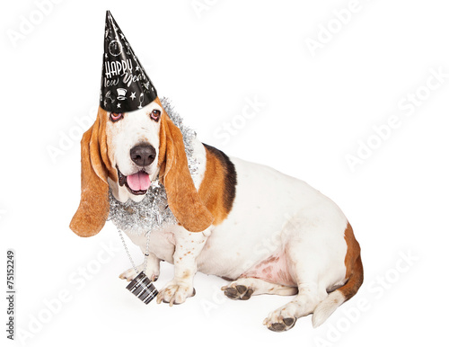 Fotografie, Obraz  New Years Basset Hound Dog