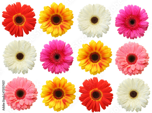 Aluminium Prints Gerbera Colorful gerbera on white background isolated