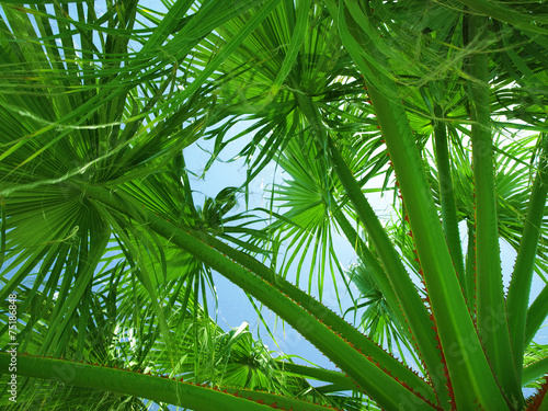 Keuken foto achterwand Bamboo beautiful palm leaves of tree in sunlight