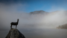 Statue Of Gold Horned Chamois ...