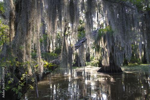 Fotografie, Obraz  Bayou Swamp Scene with Spanish Moss
