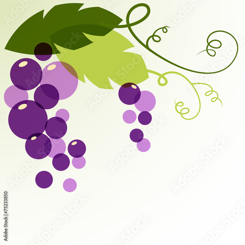 Branch of grape with leaves. Abstract vector background design t Fototapete