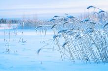 Winter Landscape With Snow-cov...