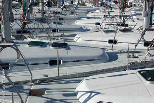 Garden Poster Water Motor sports A Fleet of Yachts