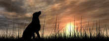 Dog Silhouette In Grass At Sun...