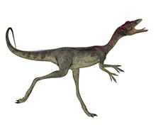 Compsognathus Dinosaur Running...