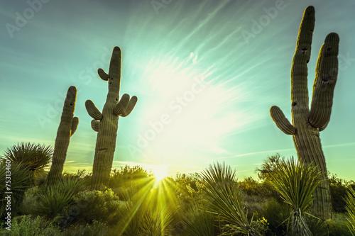 pustynny-wschod-slonca-w-scottsdale-arizona
