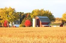 Farm Behind Cornfield