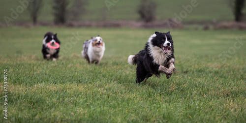 Keuken foto achterwand Kat Dogs Running and Playing