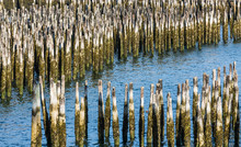 Blue Water Through Old Wood Pilings