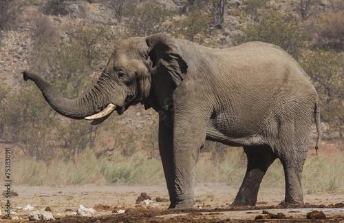 Photo Stands Elephant Trumpeting Elephant near Dolomite Camp, Etosha, Namibia