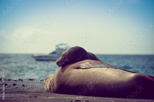 Photo  sea lions sleeping together in the galapagos islands