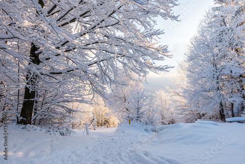 fototapeta na szkło Piękna zima w polskich Górach - Beskidy