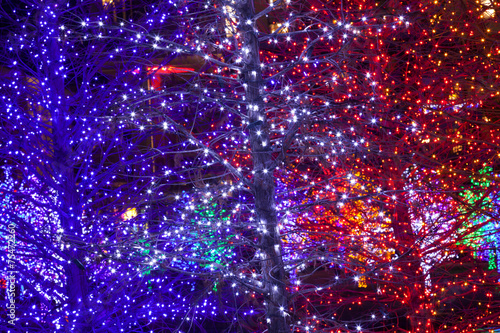 Trees tightly wrapped in LED lights for the Christmas holidays. Canvas-taulu