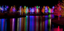 Trees Tightly Wrapped In LED L...